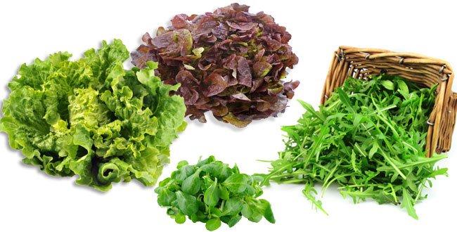 028A000005744188-photo-salade